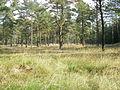 Wald Tetenhusen.JPG