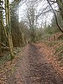 Walk through Craig y Merchant woods - geograph.org.uk - 676289.jpg
