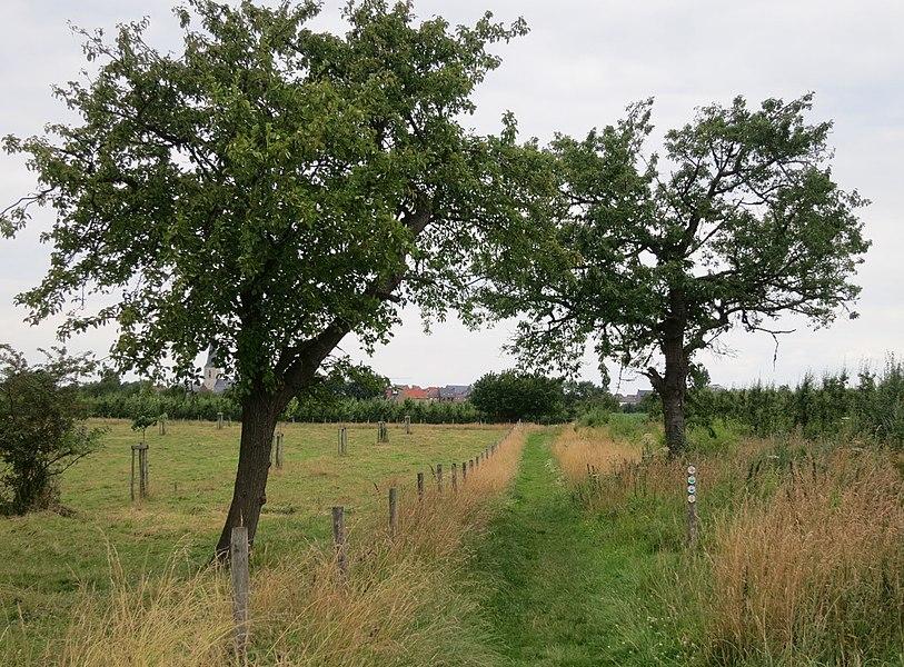 Wandelweg Borgloon