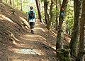 Wanderweg am Edersee Urwaldsteig Kellerwaldsteig.jpg