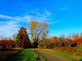 Warner Park during Autumn - panoramio (6).jpg