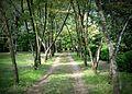 Waverly Plantation 178-001lth.jpg