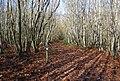 Waymarker for the Wealdway, Hurst Wood - geograph.org.uk - 1571644.jpg