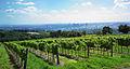 Weingarten Blick auf Wien.jpg