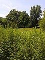 Weir Farm National Historic Site - landscape.jpg