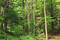 West Branch Research and Demonstration Forest (24) (28093779865).jpg