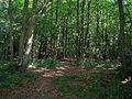 West Wood, Wivelsfield Green - geograph.org.uk - 57157.jpg