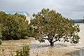 Whangaroa mangroves.jpg