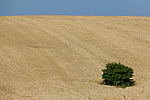 Wheat fields in Ukraine-5962.jpg