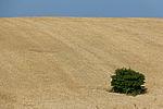 Wheat fields in Ukraine-5962.jpg