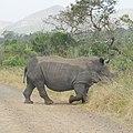 White Rhinoceros (2874385595).jpg