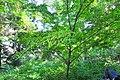 Wikipedia 13. Fotoworkshop Botanischer Garten Erlangen 2013 by-RaBoe 045.jpg