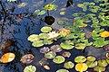 Wikipedia 13. Fotoworkshop Botanischer Garten Erlangen 2013 by-RaBoe 069.jpg