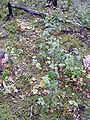 WildFireAreaNHorken0809-vegetation1.JPG