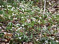 Wildflowers P4100063.JPG