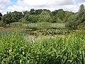 Wildlife pond, Mannington Hall - geograph.org.uk - 204939.jpg