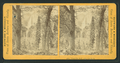 Yosemite Fall, 2,612 feet high, from Robert N. Dennis collection of stereoscopic views.png