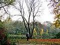 Złoty potok - park pałacowy,.jpg