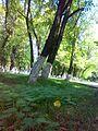 Zagatala City Park - www.Qaxlilar.tk - panoramio (3).jpg