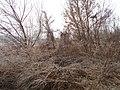 Zolotonis'kyi district, Cherkas'ka oblast, Ukraine - panoramio (454).jpg