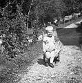 """""""Šolski"""" Marko (učiteljev sin) v Novakih z doma narjenim vozičkom 1954.jpg"""