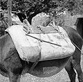 """""""Losce na basti""""- hrbtna oprema za osla, na katero so pritrdili razno posodje, bisage 1950.jpg"""