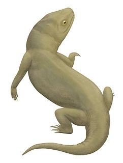 Owenettidae family of reptiles (fossil)