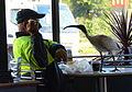 (1)Ibis in McDonalds 025.jpg