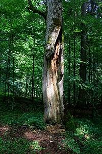 Žofínský prales 2.jpg