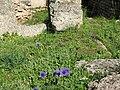 Ανοιξη στον αρχαιολογικό χώρο της Ολυμπίας.jpg