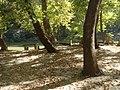 Κοιλάδα Τεμπών - Αγία Παρασκευή - Άλσος 1.jpg