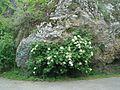 Весна у камня.jpg