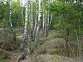 В сердце леса - panoramio.jpg