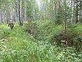 Дорога от Б.Инзера - panoramio.jpg