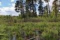 Лісові болотяні масиви с. Поташня - м. Радомишль.jpg
