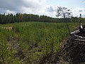 Окоп - panoramio.jpg