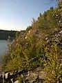Октябрьский гранитный карьер - panoramio (66).jpg