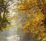 Осінні краєвиди в парку Олександрія.jpg