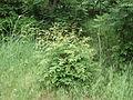 Парк шума Гази Баба во мај (1).JPG