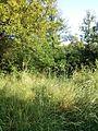 """Парк шума """"Гази Баба"""" 20.jpg"""