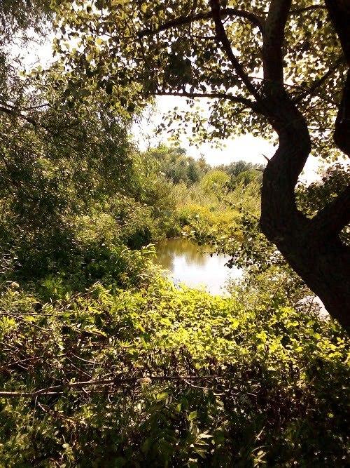 Специјални резерват природе Брзанско Моравиште, вода - извор живота