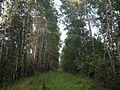 Старый Сибирский тракт - panoramio (25).jpg