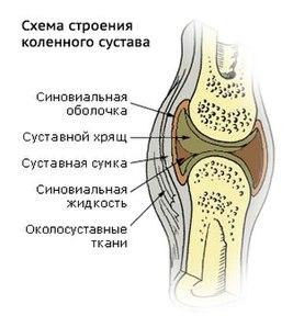 Повреждение покровного хряща коленного сустава применение шишек хвойных в лечении заб.суставов