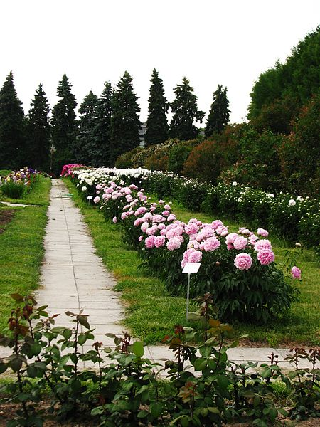 File:Сollection of peonies 01.jpg