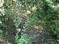 Троице-Сергиева пустынь. Мост-плотина, нижняя часть.jpg