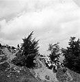 עדר כבשים ונוף בצכוסלובקיה 1937 - iדר דוד עופרi btm495.jpeg