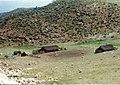 هفت کانی-گوران - panoramio.jpg
