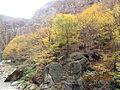 پاییز جاده هزار چم چالوس.jpg