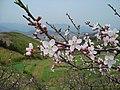 岩头下的桃花源 - panoramio.jpg