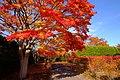 平岡樹芸センター(Hiraoka arboriculture center) - panoramio (25).jpg